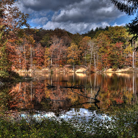 The Fall Collection (Brown County) by Geoffrey Chen - Landscapes Forests ( indiana, color, autumn, fall, landscape, leaves )