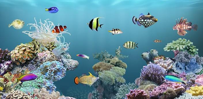 AniPet Aquarium Live Wallpaper Apk