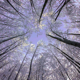 Freedom by Marius Turc - Nature Up Close Trees & Bushes