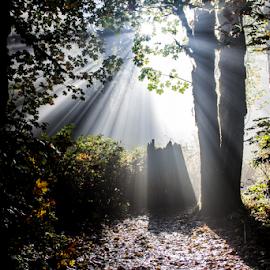 by Don Saddler - Landscapes Forests