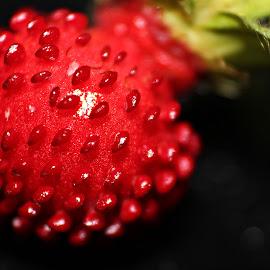 Wild Strawberry by Marlize Chkodrov - Nature Up Close Gardens & Produce (  )
