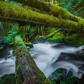 Panther Creek Log Fall by Gary Piazza - Landscapes Waterscapes (  )