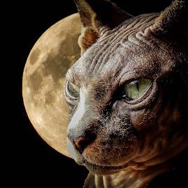 by Chris Martin - Digital Art Animals (  )