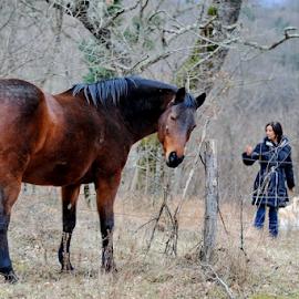 by Aleksandar Kordic - Animals Horses