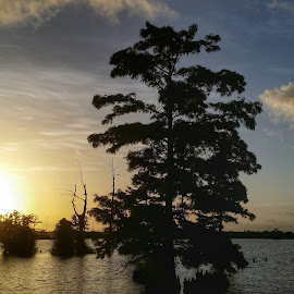 Cypress Sunset by Michael Crewz - Instagram & Mobile Android ( water, tree, sunset, louisiana, venice, cypress tree, venice louisiana, bayou, venice la, swamp )
