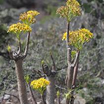 Flora y Fauna de San Luis Potosí
