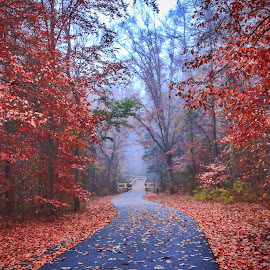 A foggy morning by Carol Plummer - City,  Street & Park  City Parks ( autumn, fog, trail, leaves, city park )