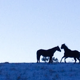 Horses at Dusk by Joan Powers - Instagram & Mobile iPhone