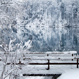 Winter Dream by Carlos Reyes - Landscapes Waterscapes