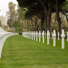 The Heroes of WW2 by Catalin Necula - City,  Street & Park  Cemeteries ( world war ii, army, heroes, american, cemetery, war )