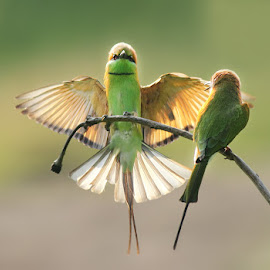 I'm Back by Karthi Keyan - Animals Birds ( animals, nature, action, birds, bee eater )