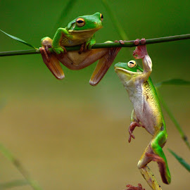 by May Wah - Animals Amphibians