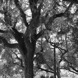 Trees and shadows by Catalin Necula - City,  Street & Park  City Parks ( lights, park, trees, barcelona, shadows )