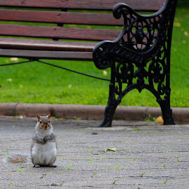 Waiting by Sanjeev Sampath - City,  Street & Park  City Parks ( park, chip n dale, furry, squirrel,  )