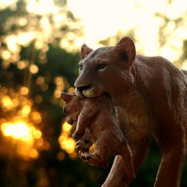 Out Of Harms Way by Vince Scaglione - Artistic Objects Toys ( lion, harm, toy, lioness, animal.cat, feline, cub )
