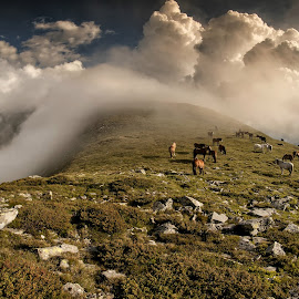 Show on top of the mountain by Grigore Roibu - Landscapes Mountains & Hills ( clouds, mountain, horses, stone, travel, gravel, landscape, mountains, foggy, nature, fog, outdoor, idyllic, summer, high, rocks, mountaintop, misty, mist )