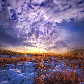 The Other Side of Waking by Phil Koch - Landscapes Prairies, Meadows & Fields ( vertical, wisconsin, ray, yellow, leaves, landscape, phil koch, photography, sun, sky, nature, tree, snow, perspective, horizons, light, office, clouds, orange, park, green, twilight, art, horizon, scenic, portrait, shadows, field, red, winter, blue, sunset, meadow, trees, lines, beam, sunrise )