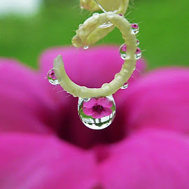 my waterdrop by Suesue Khoo - Nature Up Close Natural Waterdrops
