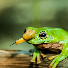 My Nose by Sofyan Ian - Animals Amphibians