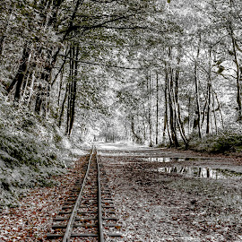 fairytale railway  by Ray Heath - Landscapes Travel ( uk, b&w, rudyard lake, rudyard, miniature railway, staffordshire, railway track )