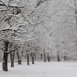 Winter by Tina Marie - Landscapes Prairies, Meadows & Fields ( snowy landscape, winter, freeze, snow, snowy, trees, landscape, frozen,  )
