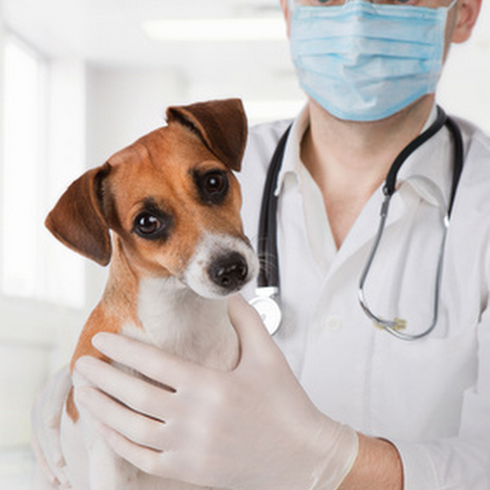 What is Demodicosis and how can we treat it