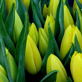 by Renata Kučan - Flowers Flower Arangements
