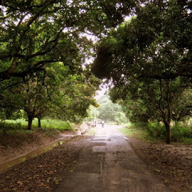 Never-ending Path by Arjun Dasgupta - Novices Only Abstract ( pathway, nature, journey, forest, road, path, landscape )