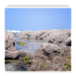 Space Coast Reef Wallpapers 1.10.1 Apk
