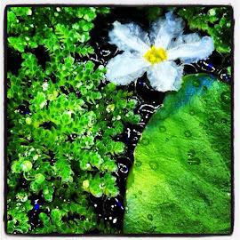 Water Snowflake  by Bridget Wegrzyn - Nature Up Close Other plants (  )