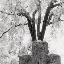 The Cross by Brenda Hooper - Artistic Objects Still Life ( film, little rock, tree, infrared, arkansas, mount holly cemetery, cross,  )
