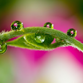 Droplets  by GPictoria -Gopu's Photography - Nature Up Close Leaves & Grasses ( macro, nature, color, flowers, close ups )