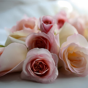 bouquet. by Tanya Popove - Flowers Flower Arangements ( bouquet, wedding, roses, pink, group, soft, flower, Flowers, Flower Arrangements )