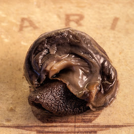 Snails by Vibeke Friis - Food & Drink Ingredients ( snails )