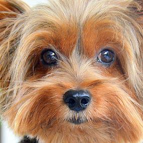 Do you love me...? by Tupu Kuismin - Animals - Dogs Portraits