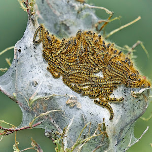 caterpillarstent_050914BIWA_AM9O3498a.jpg