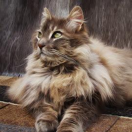 Feline Friend by Mill Tal - Digital Art Animals