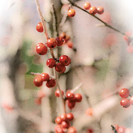 by Michael Golden - Digital Art Things ( red, nature, fall, berries )