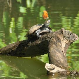 by Radek Przybyl - Animals Amphibians