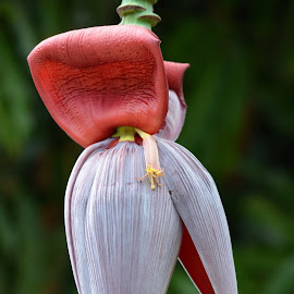 The Big Bud by Deirdre Cavener - Nature Up Close Gardens & Produce