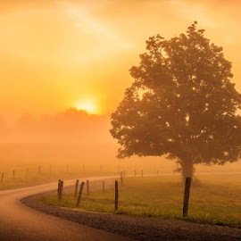 © 2014 Keith R Allen by Keith Allen - Landscapes Prairies, Meadows & Fields ( orange, great smoky mountain national park, tree, single tree, fog, road, sunrise, mist )