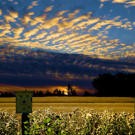clouds by Leslie Collins - Landscapes Cloud Formations ( field, clouds, sky, thistles, sunset, birdhouse, leaves, landscape )
