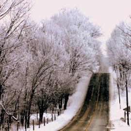 by Cee Rivera - Landscapes Travel ( snowy roads, snow )