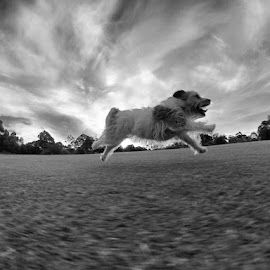 I believe i can fly! by Martin Lowe - Animals - Dogs Running