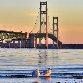 Inland Gulls by Tim Hall - Landscapes Travel ( upper peninsula, michigan, dawn, morning light, suspension bridge, huron, great lakes, lake shore, gulls )