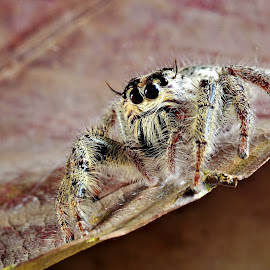 by Nik Deen - Animals Insects & Spiders