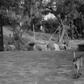 by Alegna Nehc - Animals - Dogs Running