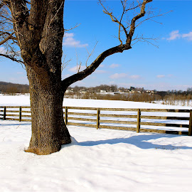 Snow scene. by Peter DiMarco - Nature Up Close Trees & Bushes ( winter snow, snow, snow scene, snowy, snow covered )