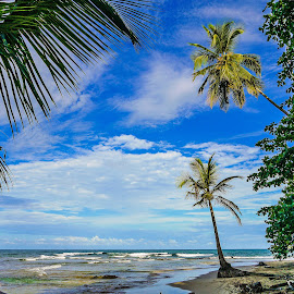 Two Palms by Laura Kenny - Landscapes Beaches ( palm, palm tree, sand, blue sky, costa rica, sea, beach, paradise, caribbean )