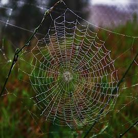 a web  by Magdalena Wysoczanska - Nature Up Close Webs